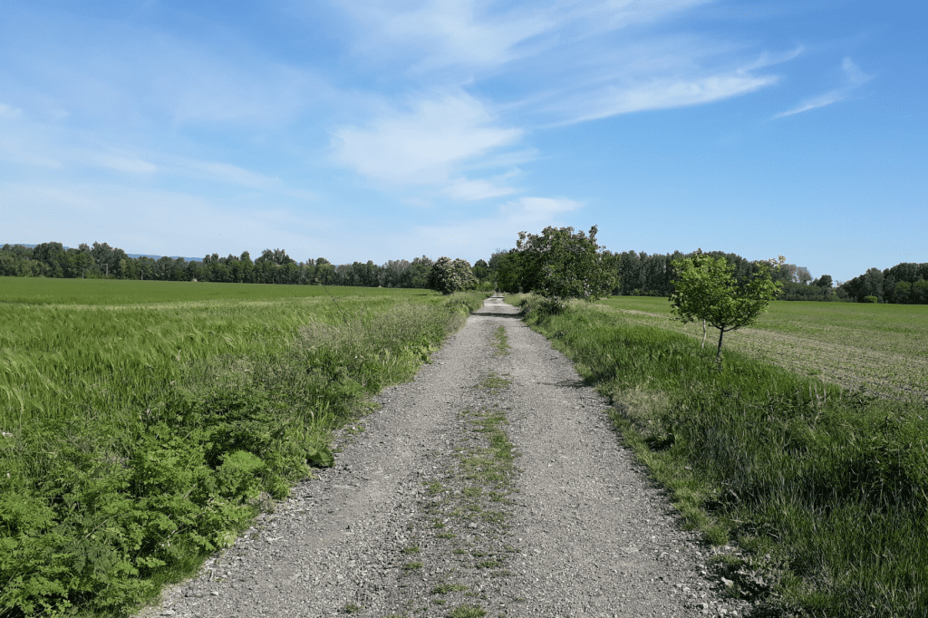 Malinovo pole