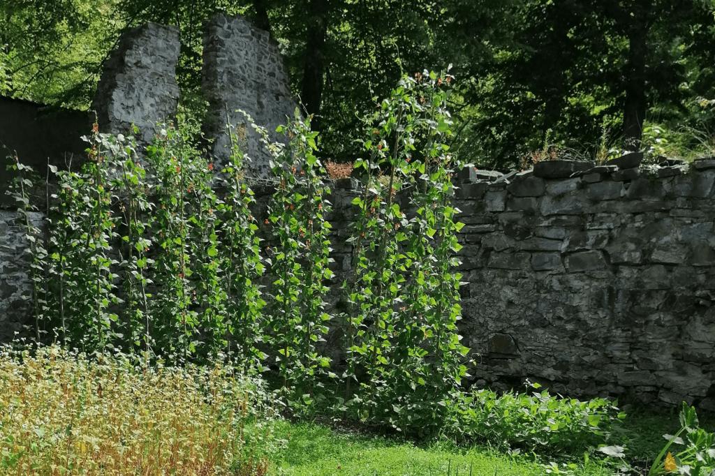Červený kláštor záhrada