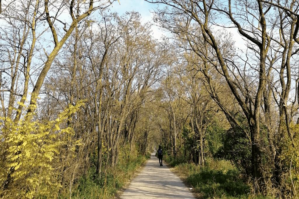 Jarovska Bazantica cesta