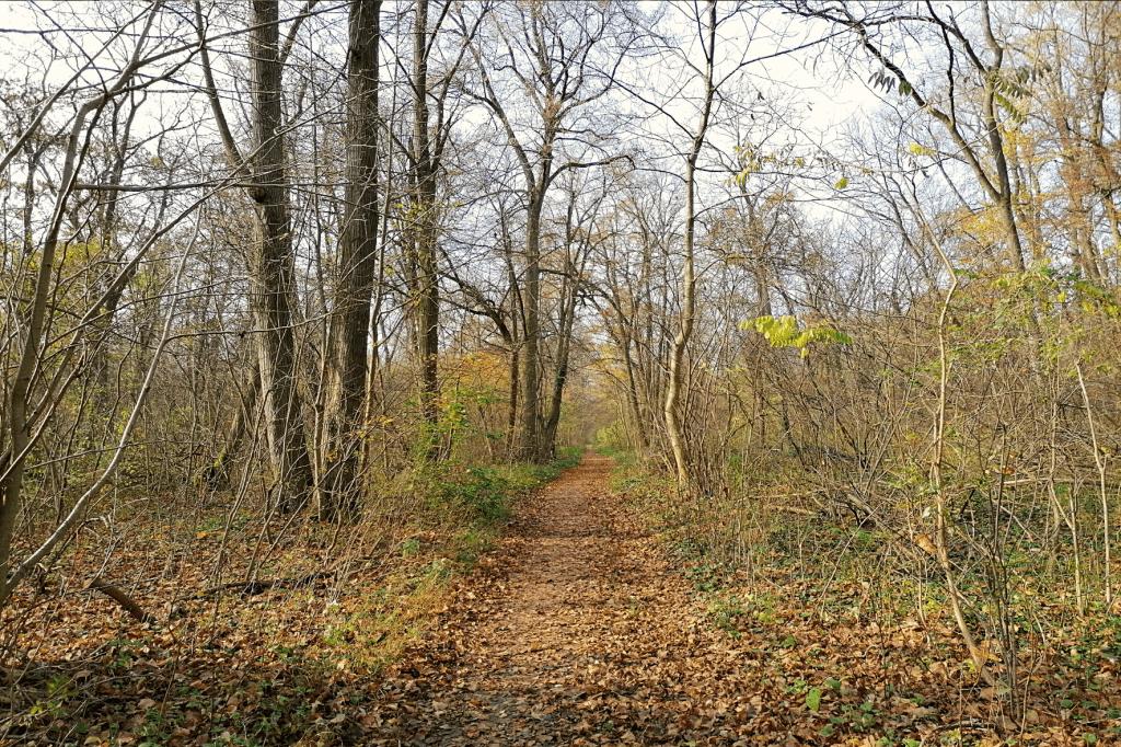 Jarovska Bazantica chodnik