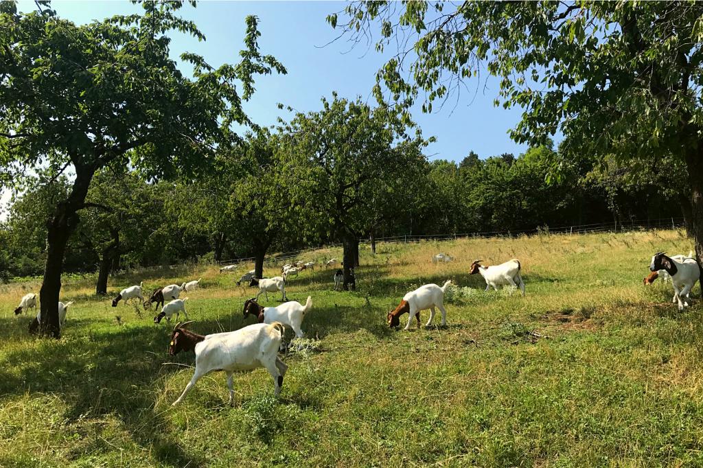 Molpir kozy