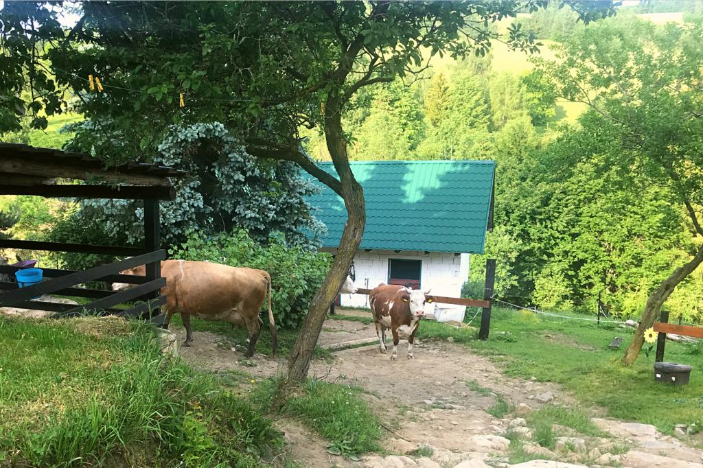 Marekov dvor krava