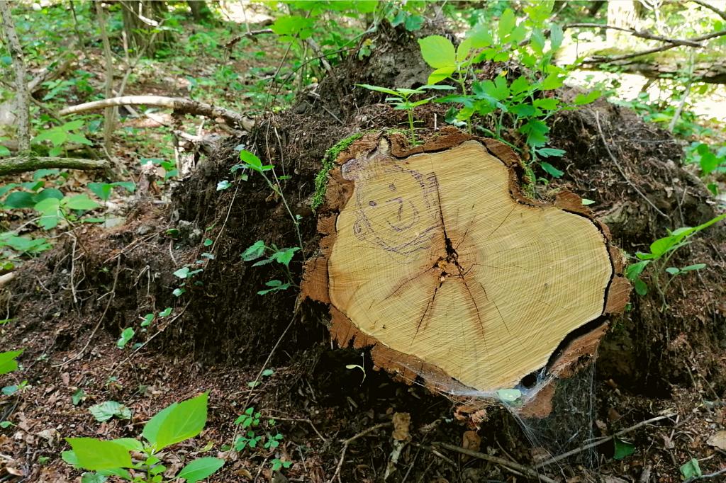 lesne umenie